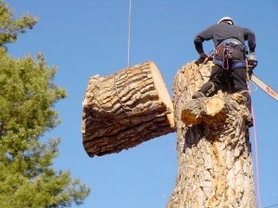 Sajnos előfordul, hogy kertünkben, házunk körül olyan nagyra nőnek a fák, hogy veszélyeztetik környezetünket. Egy ilyen veszélyes fa kivágása komoly feladat és nagyon veszélyes, ezért mindenképpen szakember kell hozzá. Vannak olyan helyzetek, amikor engedély is szükséges a túl méretes fa eltávolításához.